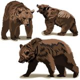 Set of brown bears. Set vector images of brown bears Royalty Free Stock Photos