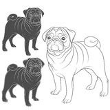 Set of vector images of pug. EPS10. Set of vector images of pug. Isolated objects on a white background vector illustration