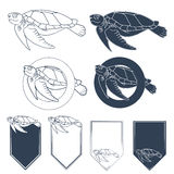Set of vector images with sea turtle. EPS10. Set of vector images with sea turtle. Vector illustration Stock Image