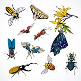 Set of vector insects colored. Set of vector insects, colored hand-drawn collection Royalty Free Stock Image