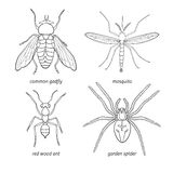 Set of vector insects Royalty Free Stock Photography