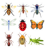Set of vector insects. Vector set of insects isolated on a white background Stock Photography