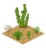 Set of vector isolated cactus plants Royalty Free Stock Image