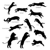 Set of vector jumping big cats. Set of jumping big cats. Vector silhouettes, icons, logotypes stock illustration