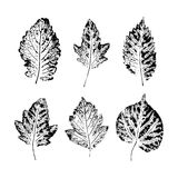 Set of vector Leaf imprints. Collection of black leaves imprints on white background Stock Photos