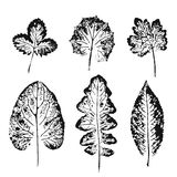 Set of vector Leaf imprints. Collection of black leaves imprints on white background. Autumn leaves. Grunge leaves Stock Photo