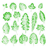 Set of vector Leaf imprints. Collection of green leaves imprints. On white background. Herbarium illustration. Botanical illustration. Grunge leaves. Leaf stamp Royalty Free Stock Images