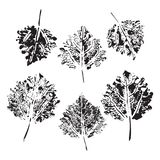 Set of vector Leaf imprints. Collection of leaves imprints on transparent background. Grunge leaves. Design elements, leaf stamp royalty free stock photos