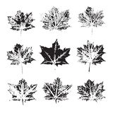 Set of vector Leaf imprints. Collection of leaves imprints on transparent background. Grunge leaves. Design elements, leaf stamp royalty free stock images