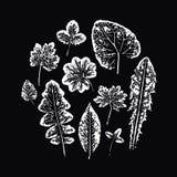 Set of vector Leaf imprints Stock Photos