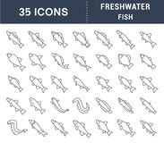 Set Vector Line Icons of Freshwater Fish. Set of vector line icons, sign and symbols of freshwater fish for modern concepts, web and apps. Collection of Royalty Free Stock Image