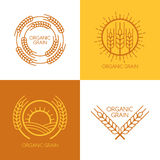 Set of vector linear wheat, fields logo design template. vector illustration