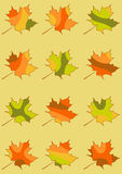 Set of vector maple leaves isolated, mosaic maple leaf in red, yellow, orange and green colors Stock Photos