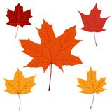 Set of vector maple leaves for your design Royalty Free Stock Photo