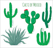 Set of vector mexican cacti Stock Images