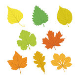 Set of vector  multicolor single leaves with veins in flat style Stock Images