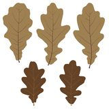 Set of vector oak leaves for your design Stock Photography