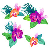 Set of vector orchids. . Royalty Free Stock Image