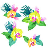 Set of vector orchids. isolated. Royalty Free Stock Photography