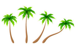 Set of vector palm trees Royalty Free Stock Image