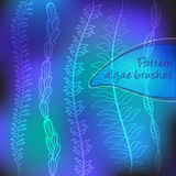 Set of vector pattern algae brushes Royalty Free Stock Image