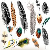 Set of vector realistic colorful feathers. Big set of detailed bird feathers in realistic and engraved style Royalty Free Stock Photography