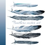 Set of vector realistic colorful feathers Royalty Free Stock Photos