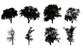 Set of vector realistic silhouettes of deciduous trees. Isolated on white background vector illustration
