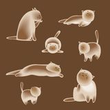 Set of vector siamese cats. Set of siamese vector cats characters on brown background Royalty Free Stock Photography