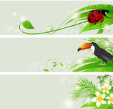 Summer green banners. Set of vector summer banners with flowers and green leaves Royalty Free Stock Photos