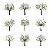 Set of vector trees with green leaves. Vector Illustration. Floral elements Royalty Free Stock Images