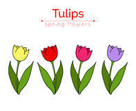 Set of vector tulips. Flat icons of red, pink, yellow, violet tulips. Linear varicolored tulips with green leaves. Spring flowers. Stock Image