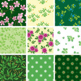 Set of vector various  seamless floral pattern Royalty Free Stock Photos