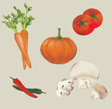 Set of Vector Vegetables Stock Images