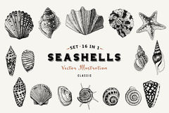 Set of vector vintage seashells. Nine black illustrations of shells. Stock Photography