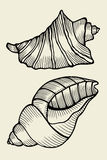 Set of vector vintage seashells Royalty Free Stock Image