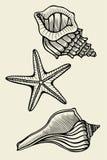 Set of vector vintage seashells Royalty Free Stock Photography