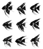 Set of vector watercolor black angelfish. Collection of vector watercolor black angelfish Royalty Free Stock Images