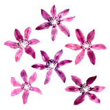 Set with vector watercolor clematis Stock Photography
