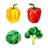 Set of vector watercolor vegetables. Pepper, broccoli, brussel  Stock Photography