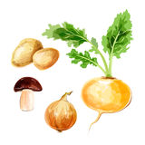 Set of vector watercolor vegetables. Potato, onion, mushroom Royalty Free Stock Photos