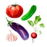Set of vector watercolor vegetables. Tomato, cucumber, eggplant, Stock Images