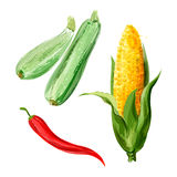 Set of vector watercolor vegetables. Zucchini, corn, red chili Stock Photo