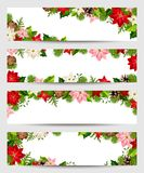 Christmas banners with fir branches and poinsettia flowers. Set of vector web Christmas banners with fir branches and poinsettia flowers Stock Image
