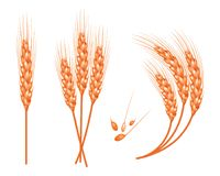 Set of vector wheat in 3d isolated white background with seed addition. Vector. Set of vector wheat in 3d isolated white background with seed addition. Vector Royalty Free Stock Photo