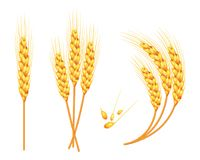 Set of vector wheat in 3d isolated white background with seed addition. Vector. Set of vector wheat in 3d isolated white background with seed addition. Vector Stock Image