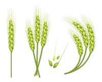 Set of vector wheat in 3d isolated white background with seed addition. Vector. Set of vector wheat in 3d isolated white background with seed addition. Vector Royalty Free Stock Photography
