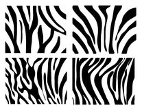 Set of Vector zebra texture Royalty Free Stock Photography