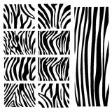 Set of Vector zebra texture Stock Image