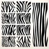 Set of Vector zebra texture Stock Images